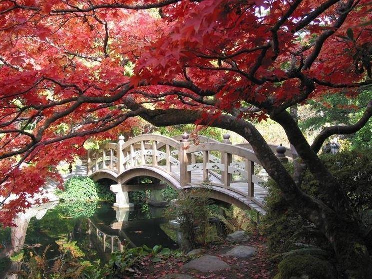 L istituto di cultura nipponico riapre le meraviglie dei giardini